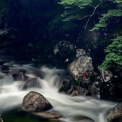 「渓流と岩ツツジ(小戸名渓谷)」の写真素材