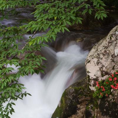 清流と新緑と岩つつじ(小戸名渓谷)の写真