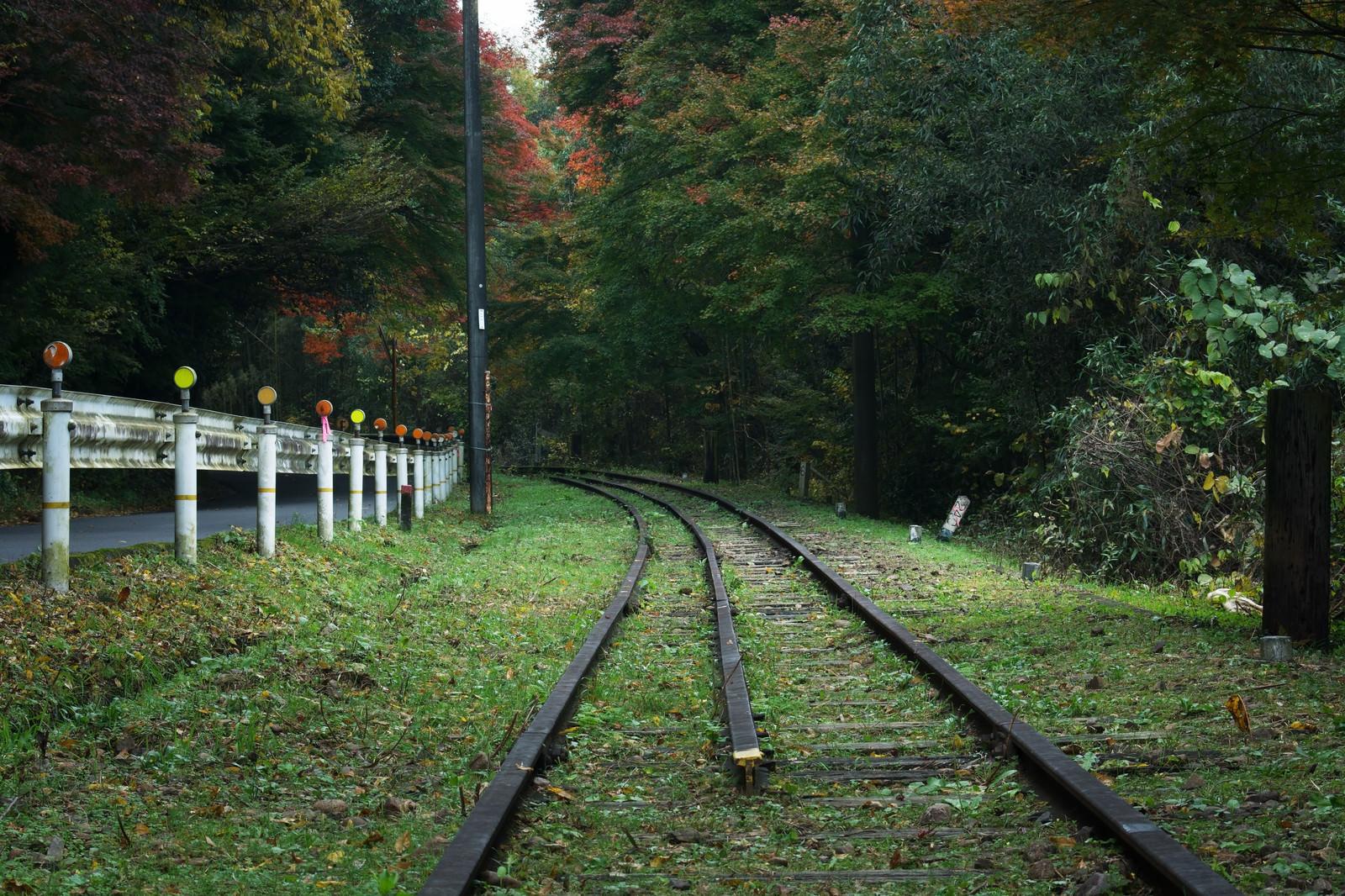 「森の中へと続く道路沿いの廃線」の写真