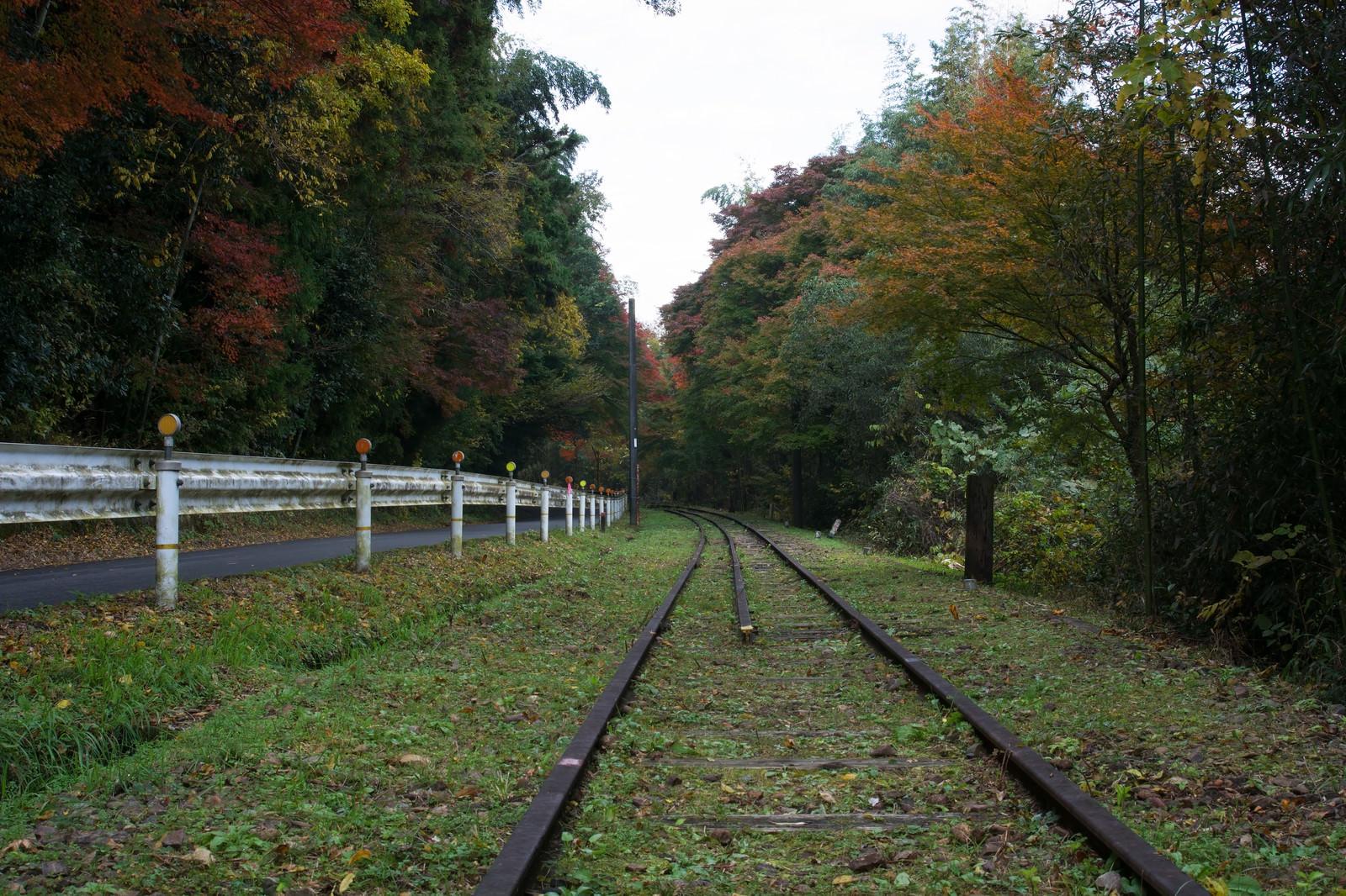 「道路と並走する初秋の廃線」の写真
