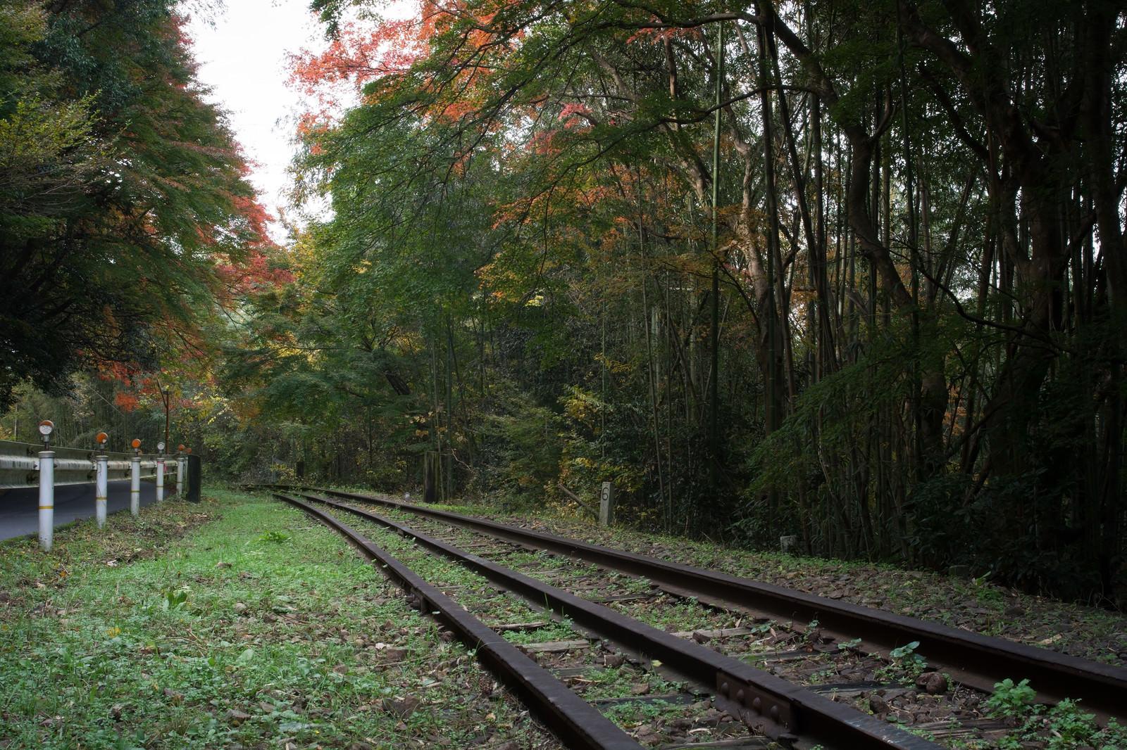 「紅葉の中へ続く廃線」の写真