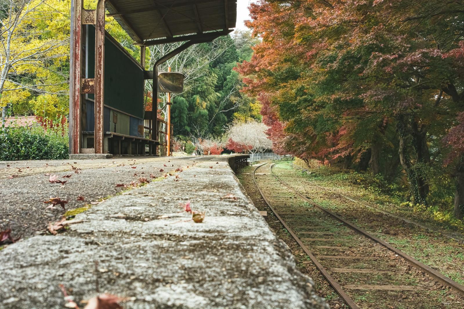 「廃駅のホームに落ちる紅葉」の写真