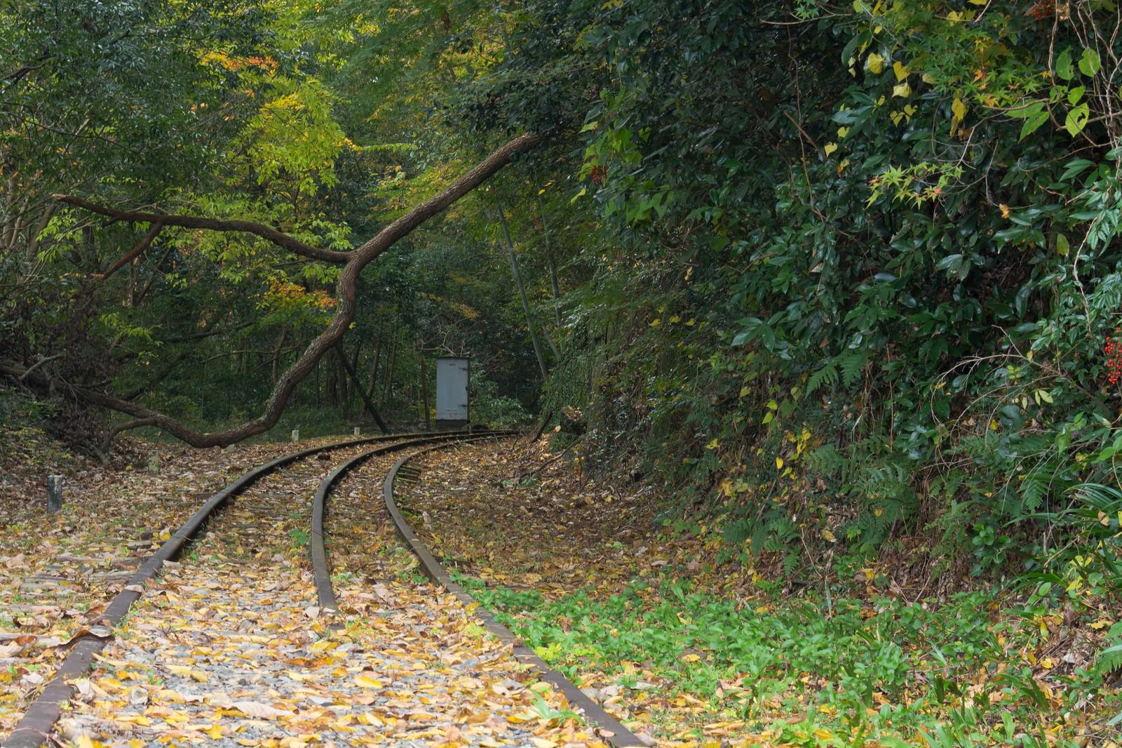 「倒木で進めない廃線」の写真