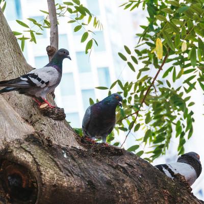 頭上から餌を狙う鳩の写真